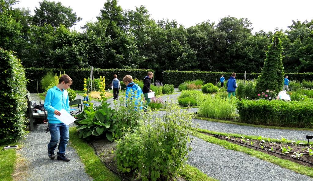 En av oppgavene gikk ut på nøyaktig opptelling av humler på de viktigste plantene for nektarproduksjon. Foto: Tor Bollingmo.