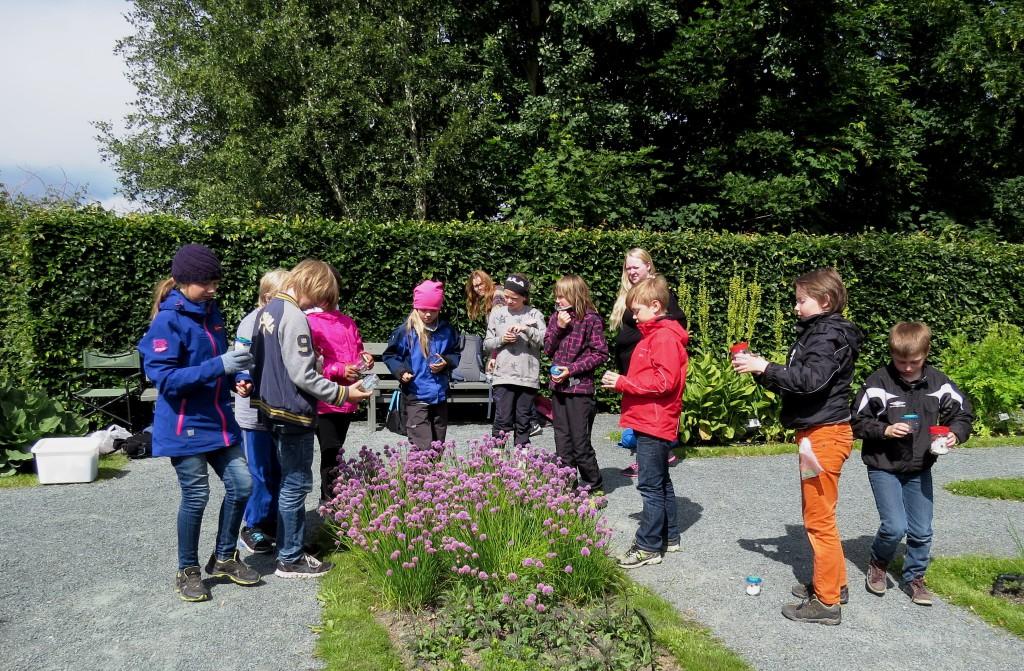 Deltakerne samlet rundt et bed av blomstrende grasløk i Ringve botaniske hage, der innfangede humler fikk friheten tilbake. Foto: Tor Bollingmo.