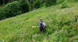 Entomologen Roald Bengtson i arbeid ute i felten. Foto: Kjell Magne Olsen.
