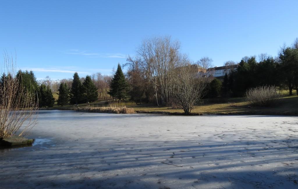 Det er fremdeles is på dammen og frost i bakken på Ringve så tidlig som 13. mars. Foto: Tor Bollingmo.