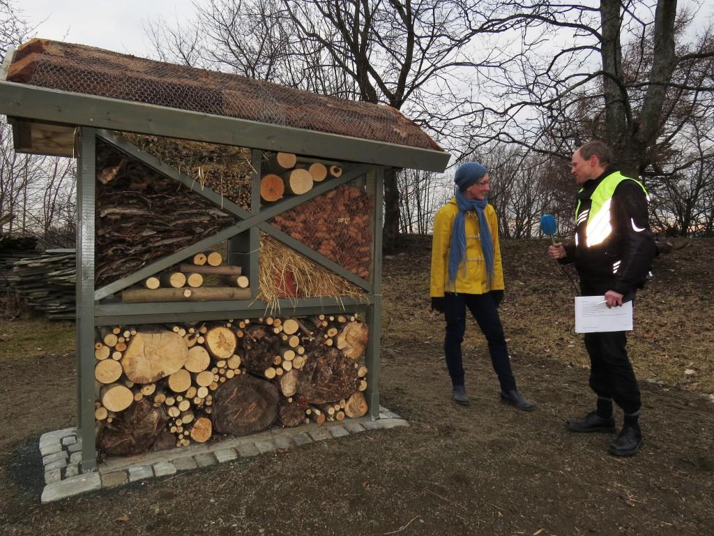 Daglig leder Vibekke Vange (t.v.) og NRK-reporter Morten Karlsen i prat ved det nye insekthotellet på Ringve. Foto: Tor Bollingmo.