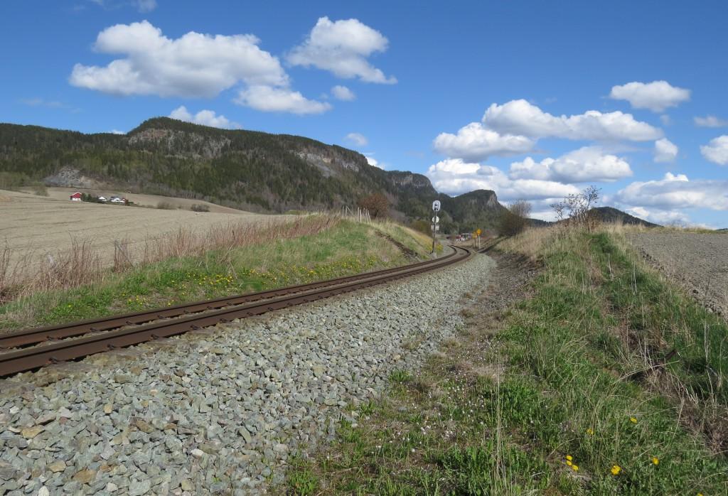 Skråningene langs jernbanelinja mellom Stjørdal og Skatval i Nord-Trøndelag har tette bestander av blomstrende løvetann i mai, og er uvanlig gode lokaliteter for dronninger av lundhumle Bombus soroeensis. Foto: Tor Bollingmo.