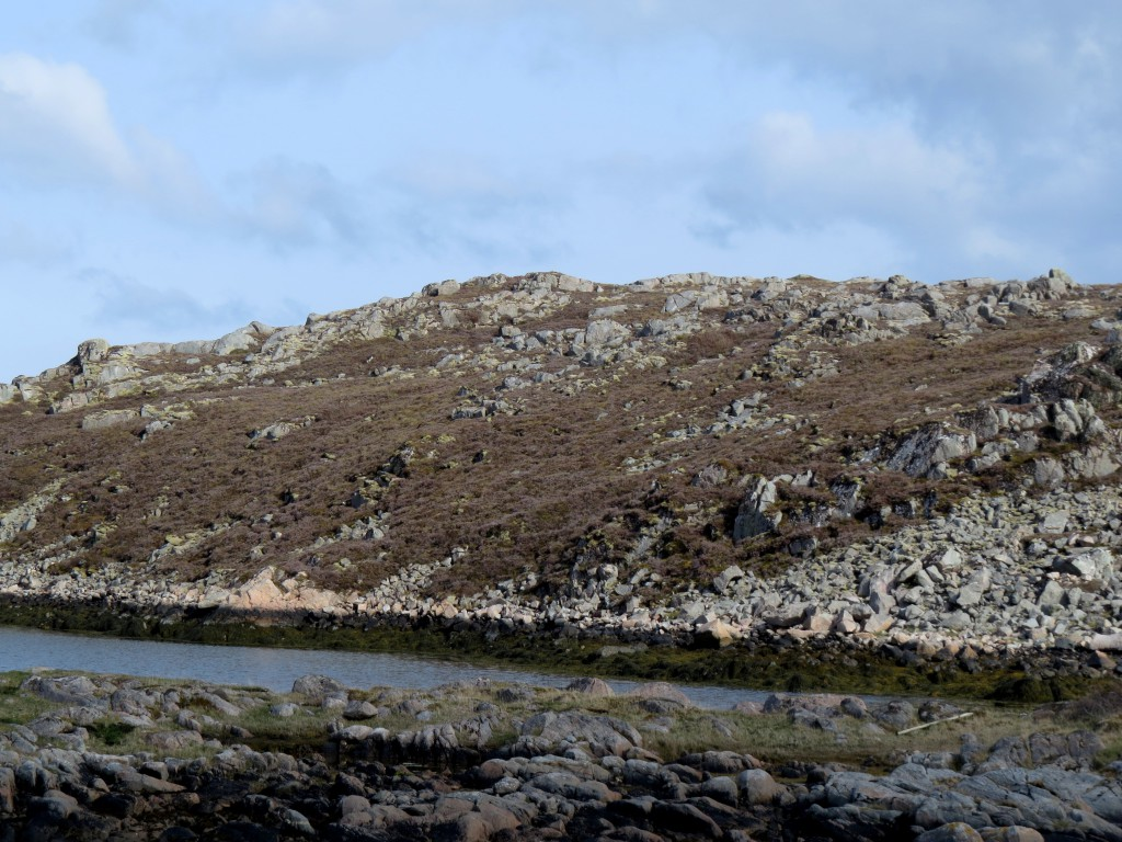 Enorme områder med kystlunghei er fullstendig rasert etter de siste par årenes tørke på kysten. Dette bildet er tatt i Dyrøy-området på Frøya, Sør-Trøndelag, 17. mai 2015. Foto: Tor Bollingmo.