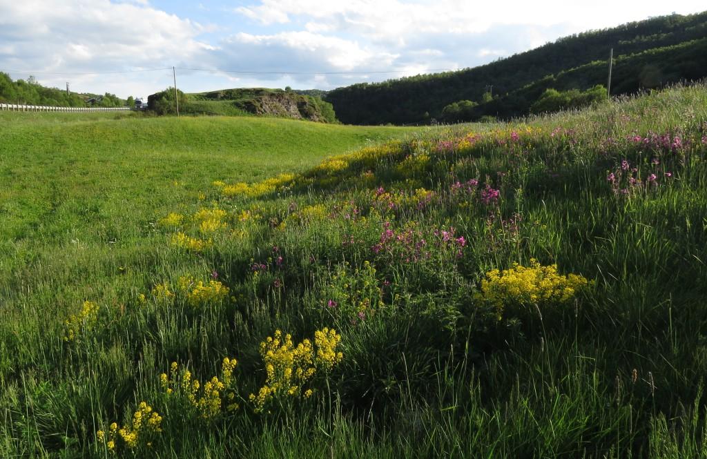 Den gamle slåtteenga ved Kongsvoll fjellstue er et av de flotteste områdene både for planter og insekter langs hele Dovrefjell. Her på kveldingen 4. juli 2015. Foto: Tor Bollingmo.