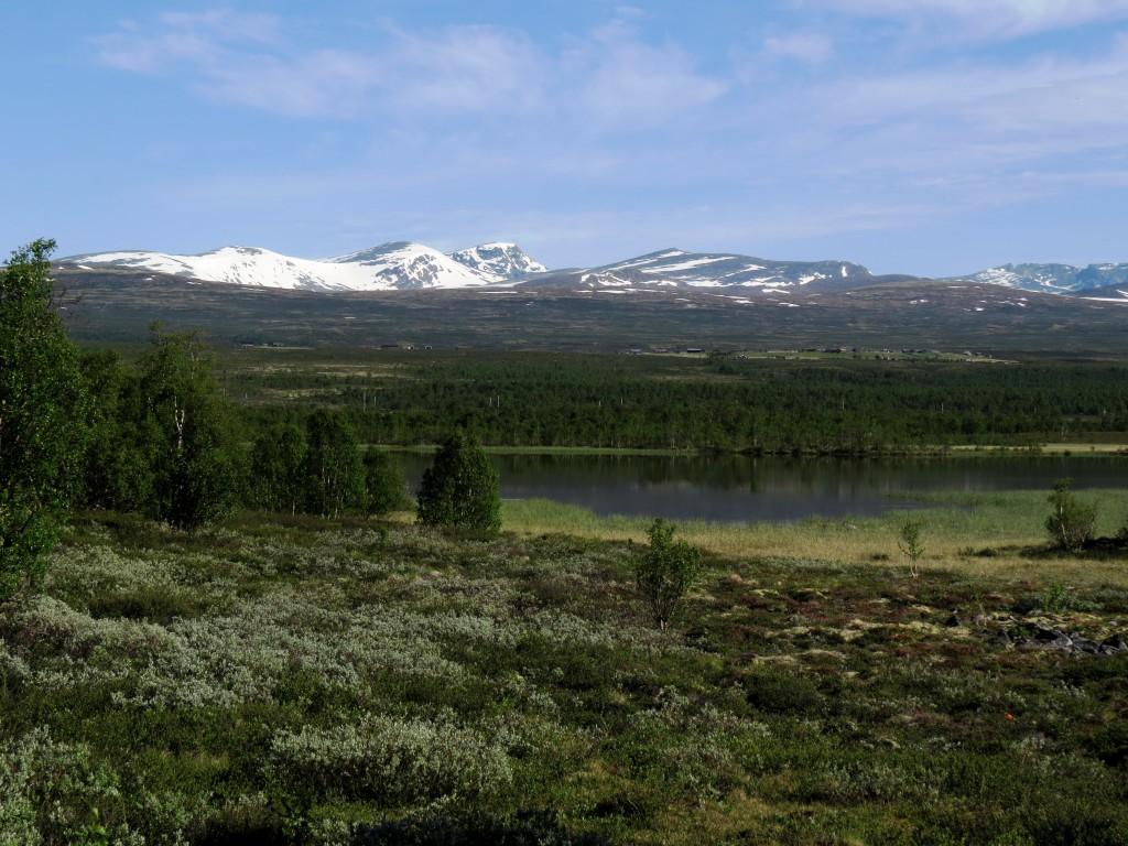 Kringluttjern på Fokstumyra, Dovrefjell på morgenkvisten søndag 5. juli 2015. Over ca. 1200 meter ligger det fremdeles store snømengder. Foto: Tor Bollingmo.