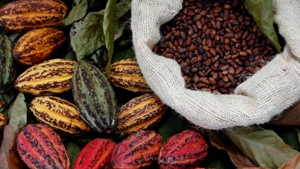 Kakaobelger og -bønner vakte interesse hos de spanske oppdagerne på 1500-tallet, uten at de helt forsto potensialet.