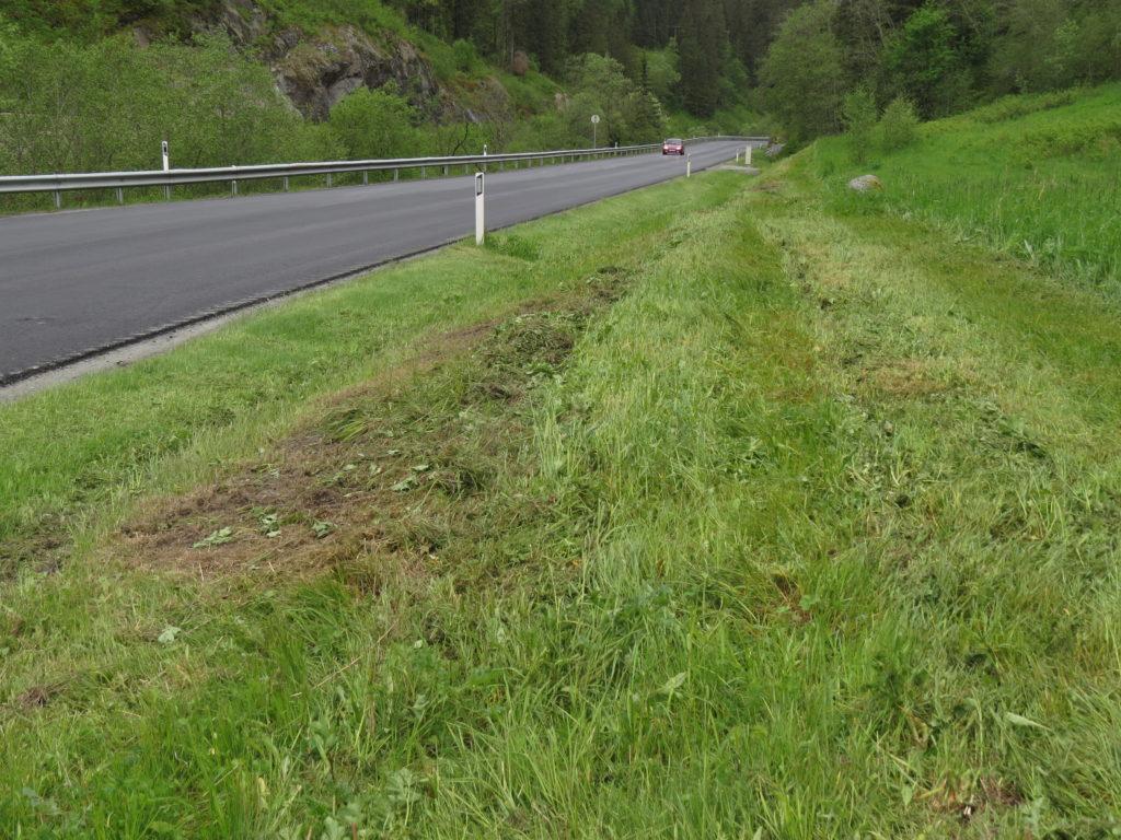Eksempel på håpløs kantslått allerede i første uke av juni i Levanger kommune, Nord-Trøndelag. Foto: Tor Bollingmo.